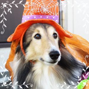 【複製】HAPPY HALLOWEEN だよ!、お菓子くれなきゃ、悪戯するよ!