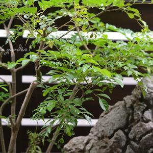 梅雨の合間の玄関前庭から