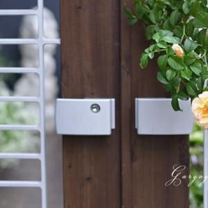 玄関奥庭で咲き始めた万葉の萩の花