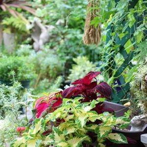 ゴーヤの初めての実と雨の庭