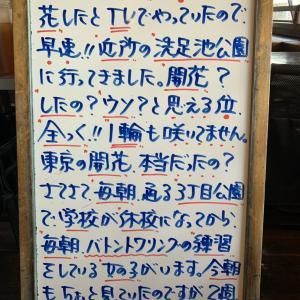 東京の桜の開花…本当?