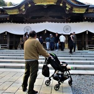 弥彦神社菊祭り