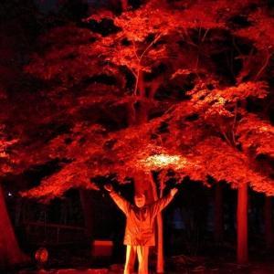 陀羅尼八幡神社もみじまつりライトアップ