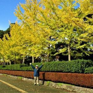 高田公園イチョウの木紅葉