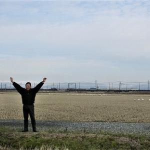 「下町ロケット」の田んぼに白鳥の群れ