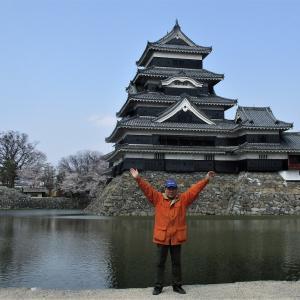 松本城さくら満開