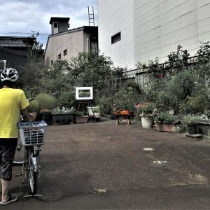 上越オープンガーデンと花めぐり 本町6節子様の庭ガーデン