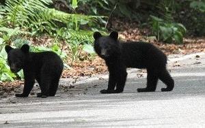 まだらおの湯 久しぶりに熊に遭遇