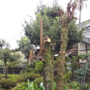 庭木剪定❗️