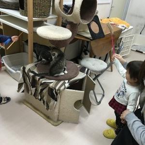 お子様も楽しめる「なないろしっぽ」常設譲渡会場IN岡山
