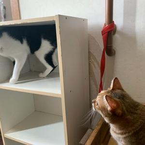 家猫検定合格★ぶーぶー