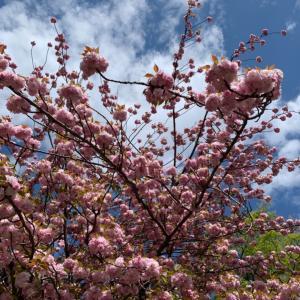 空と桜で繋がろう2021年