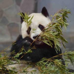 タンタンありがとう♡神戸王子動物園