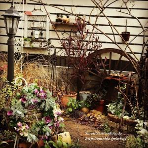 Andyの病状&明るい冬の庭
