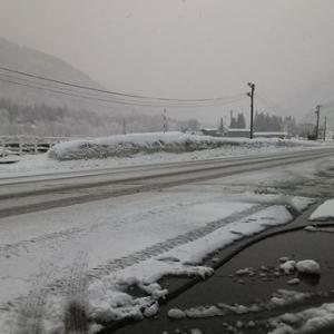 久しぶりに雪景色です
