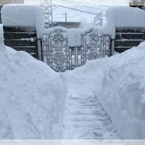 雪の下から♪