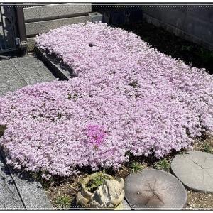 花のある風景はいいなぁ~♪