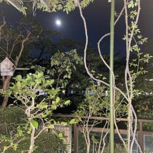 2021中秋の名月と信濃川の朝日