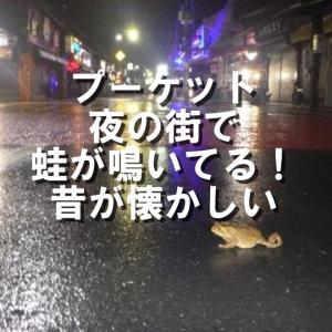 プーケットとは雨季雨ばかり!夜の街にカエルが鳴いてる昔が懐かしい!