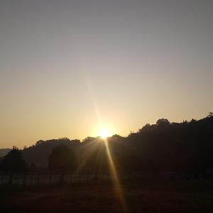 暖かい日が続く