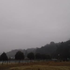 今日もまた雨
