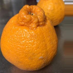デコポン 来たぁ!!  -2020年 柑橘-