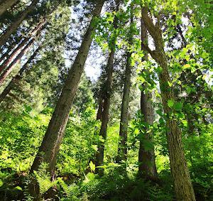 求められている森林調の香り