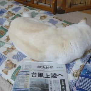 愛ちゃんも自宅待機です、台風19号が関東上陸へ。