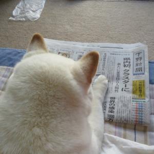 新聞を読む、愛ちゃん