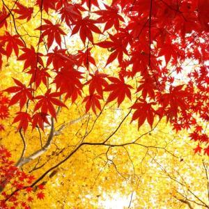 """秋のケア 肌も体も栄養素を蓄える""""秋""""の美肌法"""