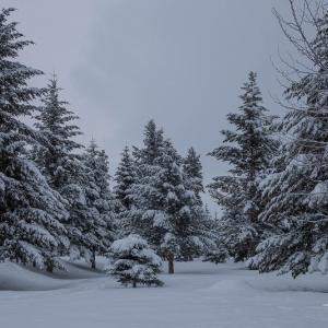冬日 #3