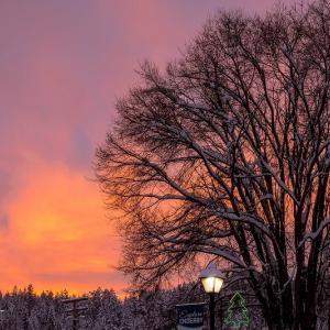 木と夕焼け
