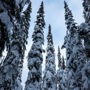 バックカントリー・スキー 20210124
