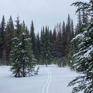 雪の降る森