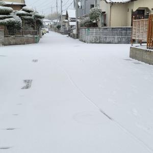 大雪でラッキー?