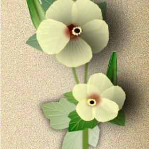 オクラの花と実
