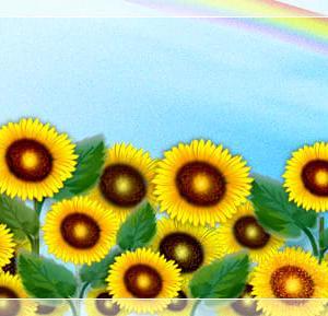 向日葵(ひまわり)と虹♪