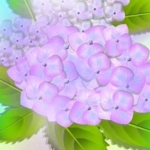紫陽花(ピンクとブルー)