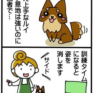 訓練タイムに消える犬 チワワ4コマ漫画