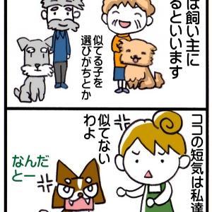 犬は飼い主に似る? チワワ4コマ漫画