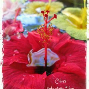 ゆらゆらとゆらゆらと赤い花…石垣島