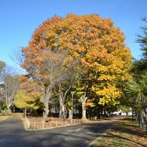 晩秋の札幌円山公園