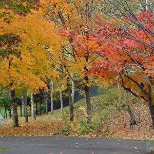 滝野スズラン丘陵公園の紅葉と黄葉