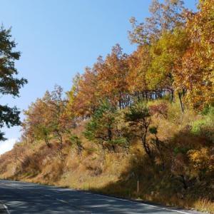 マゼノ渓谷紅葉ツアー