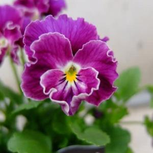紫づくし~♪(^_^A。。。