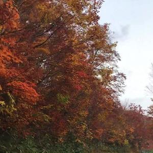 【動画】片品村鳩待峠へ上がる途中の紅葉