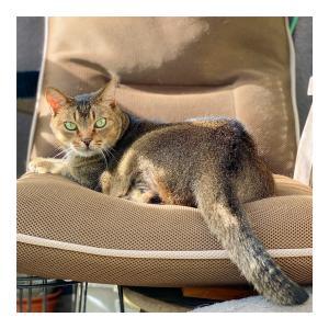りょうたの専用椅子