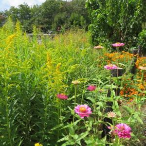 秋の旅・風景と季節の花々
