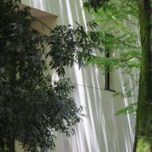 木漏れ日の散策(東京大学本郷~銀座~有楽町)