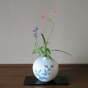 小品花と茶花、そして見学の旅(成田空港他)